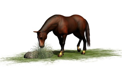 brown horse grazes isolated on white background