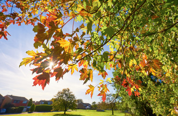 End of summer leaves
