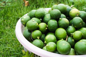 fresh lime in basket on the grass ground