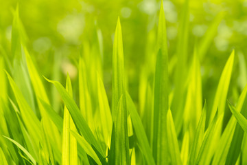 Green grass a sunny day, abstract ecological background.