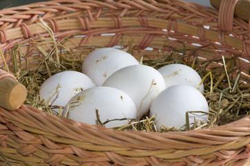 Panier d'œufs blancs bio
