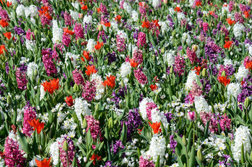 Bright cauliflower background with spring flowers (anti-stress,