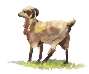 watercolor goat in profile