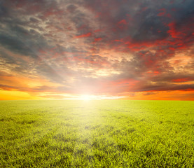 Wall Mural -  field and sun