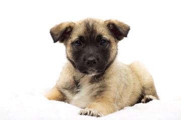 little puppy looks