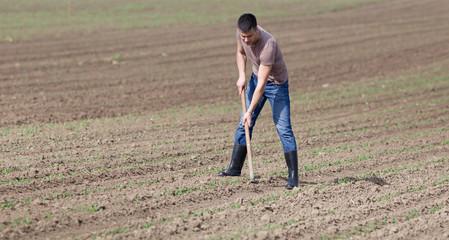 Farmer hoeing soil