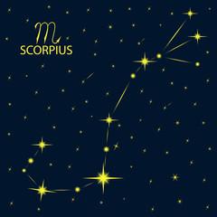 Zodiacal constellations SCORPIUS. Scorpio. Vector.