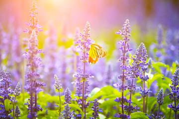 Morning flower garden