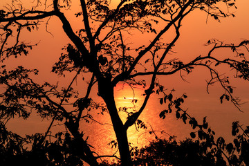 Silhouette of a single tree against the setting sun with Golden