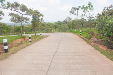 Road to entrance to Siam tulip at Chaiyaphum Province, Thailand