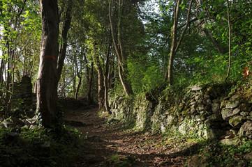 Corse, sentier en forêt de Costa verde