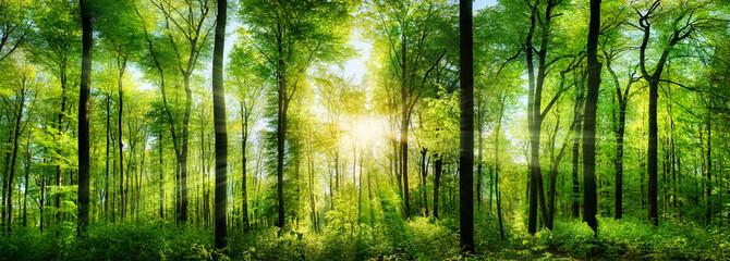 panoramnie-foto-prirodi-visokogo-razresheniya