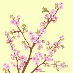 Flowering cherry branch.Vintage background
