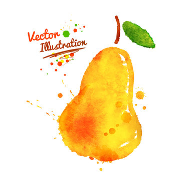 Watercolor pear.