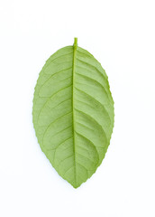 lime leaf isolated white background