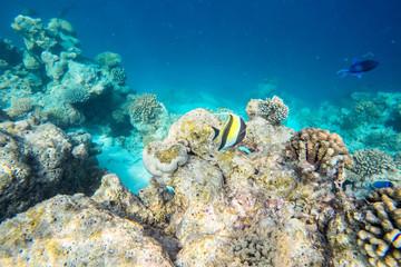 exotic marine life near Maldives island