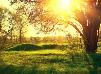 Fotoväggar - Nature landscape. Sunset scene