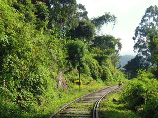 railway in the forest