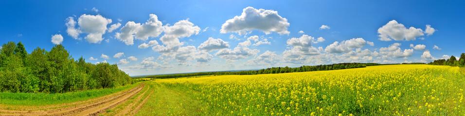Photo sur Plexiglas Sauvage Spring flower field
