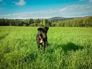 Hund steht auf einer Wiese am Waldrand