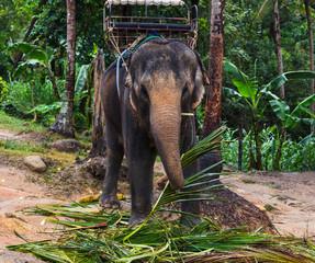 elephant, bishop, jumbo