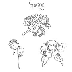 Sketch, flowers, spring, vector, illustration
