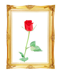 red rose on golden frame with empty  for your picture, photo, im