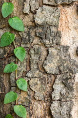 art abstract natural backgrounds with tree bark