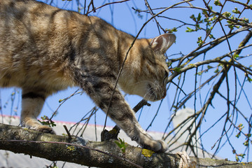 Cat walking on tree