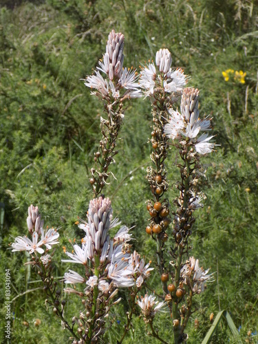Flores Blancas Silvestres Stock Photo And Royalty Free Images On