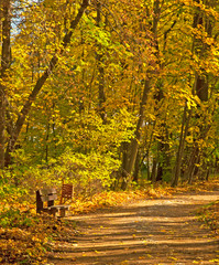 Pathway through the forest in autumn