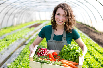 Fototapeta Young attractive woman harvesting vegetable in a greenhouse obraz