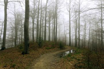 Zamglony las w Beskidzie Niskim. Podtopione drzewa i mokradła