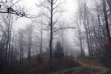 Wzgórze i zamglony las w Beskidach
