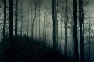 Obraz Ciemny, mroczny las w białej mgle - fototapety do salonu
