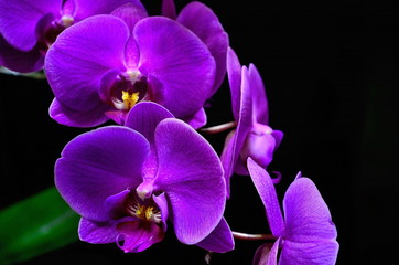 Orchid. Floral abstract background.