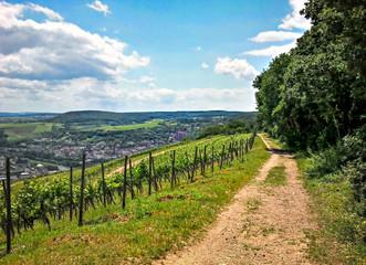 Wanderweg im Rheingau in Hessen