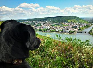 Hund schaut auf den Rhein im Rheingau