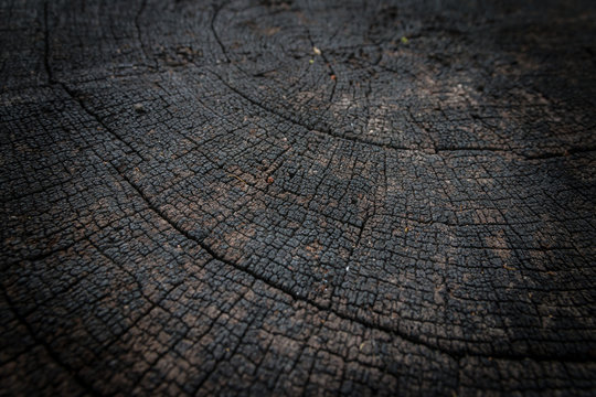 Crack and weathered tree rings