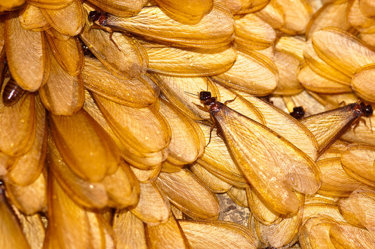 many of winged termite on ground