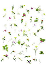 set of spring flowers isolated on white background