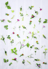 set of spring flowers on white background