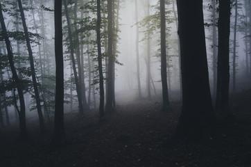 forest night scene