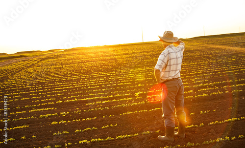 Senior farmer standing in a field and looks into the distance