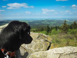 Hund schaut von einem Berg in den Taunus