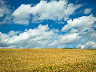 Kornfeld vor blauem Himmel mit Wolken