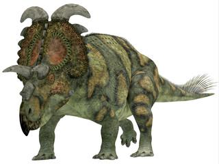Albertaceratops over White