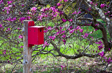 A red birdhouse next to a blooming magnolia tree.