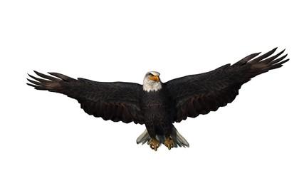 eagle - isolated on white background