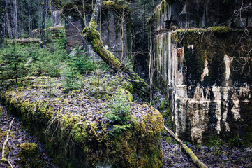 Ruins and moss
